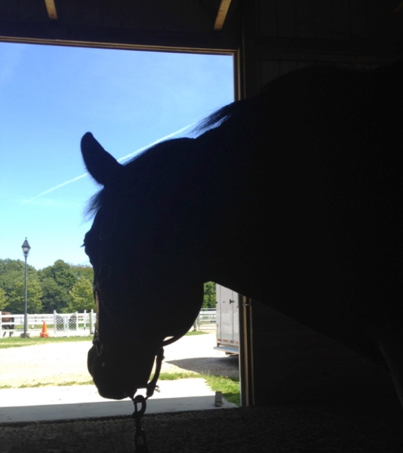 Eli gazing out the window.