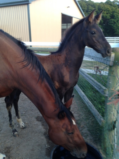 Sandpiper Farm baby, Rubilee SPF and her mommy Leah.