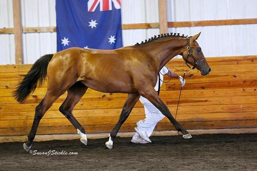 Rafaela SPF owned by George Skurla, bred by Sandpiper Farm.